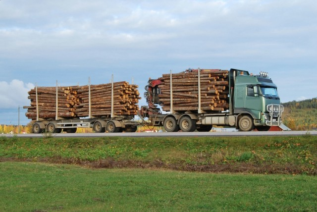 System Należytej Staranności kontroli drewna to precyzja gromadzenia danych na temat całego procesu powstawania surowca