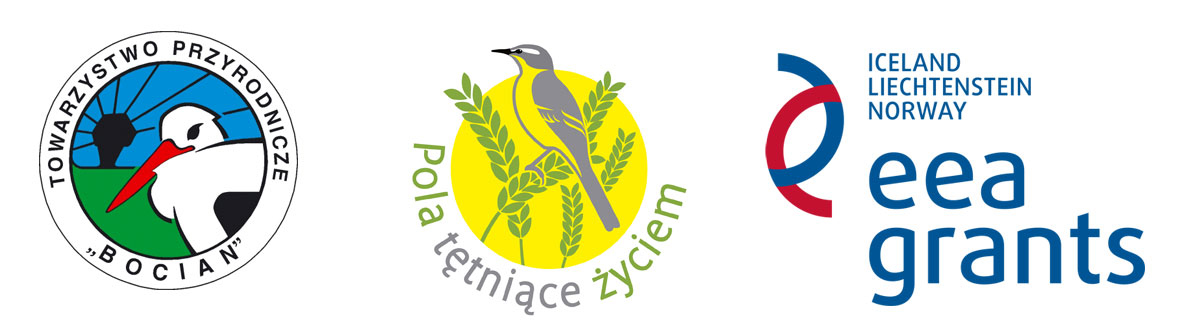 pola logotyp