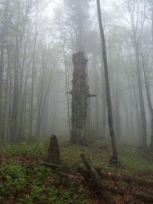 """""""Martwe"""" drzewo w Karpatach"""
