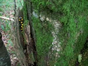 Poznać tajemnice drzewa