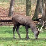 red-deer-225255_1280