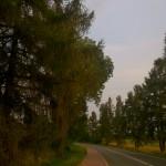 Aleja 180 drzew przeznaczona do wycinki pod...zieloną ścieżkę rowerową.