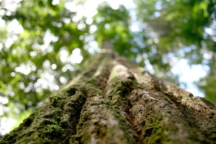 drzewo2