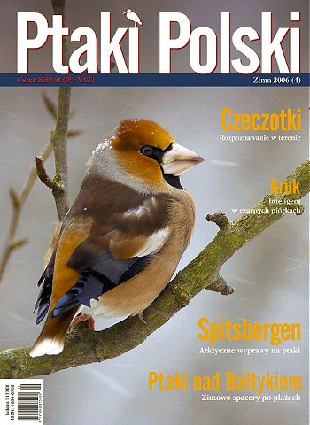ptaki-04-06-ok_d